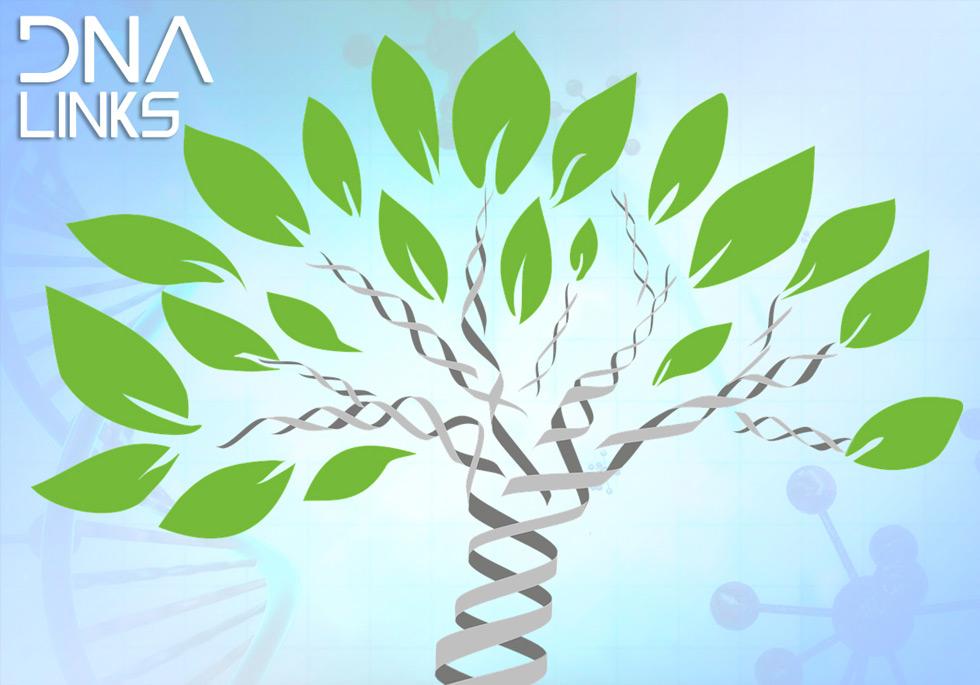 DNA Links